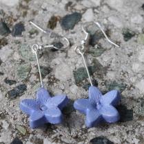 Světle modré květinky